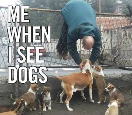me when i see my dogs