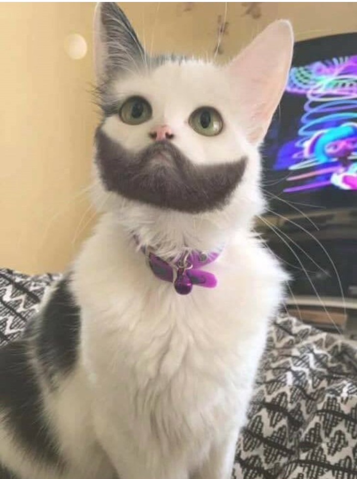 This bearded cat