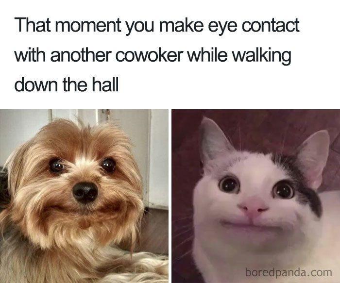 Coworker Meme