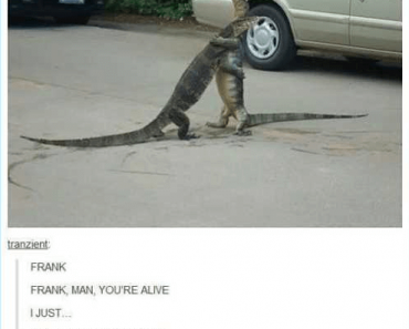 two lizards hugging in the roadtwo lizards hugging in the road